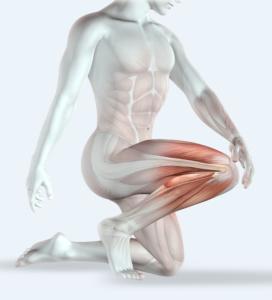 rendu 3D d'un homme et de ses muscles, un genou à terre